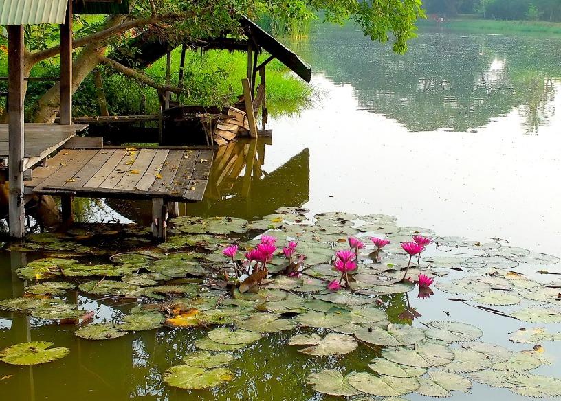 ลุ่มแม่น้ำน้อย อู่ข้าวอู่น้ำที่อุดมสมบูรณ์