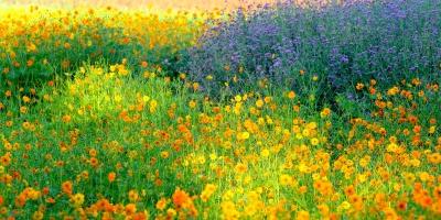 ดอกไม ต้นไม้ ธรรมชาติ