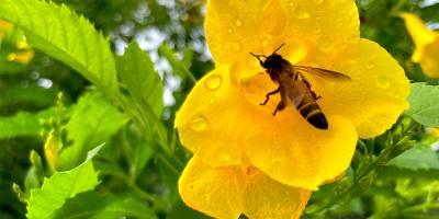 ดอกไม้กับผึ้ง